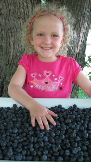 A big harvest from Duke blueberry plants at True Vine Ranch