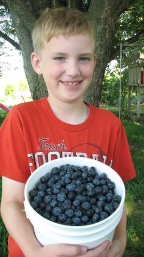 A pick pail full from Bluecrop blueberry plants at True Vine Ranch